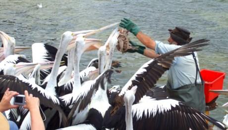 John the Pelican Man